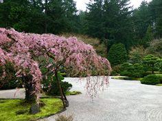 Japanese Garden (Portland, OR)