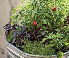 Afbeeldingsresultaat voor small vegetable garden