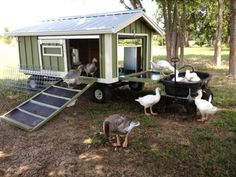 Large Portable Goose Or Duck Coop Wagon With Water Catchment Portable Pond