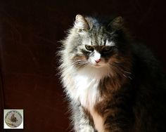 Cat Photography Dramatic Lighting Feline Photo by KneeDeepStudio