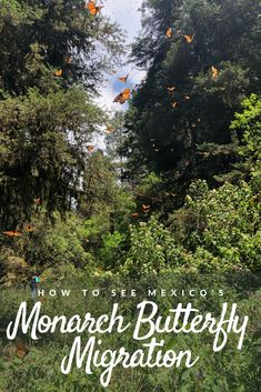 If the monarch butterfly migration isn't already on your Mexico bucket list, it should be. Use this guide to plan a visit to the most magical place in the country and learn how to take an epic road trip to the Michoacan monarch sanctuaries! Monarch Butterfly Migration, Best Hikes, Natural Phenomena, Mexico Travel, Plan Your Trip, Travel Around The World, The Great Outdoors, Travel Guide, Travel Inspiration
