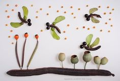 Creative pictures made of seed and seed pods