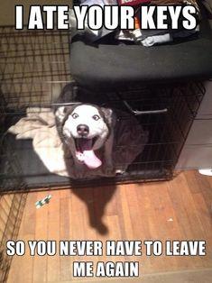 #Adorably #Husky / funny pics