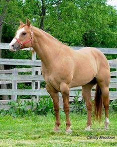 Phenomenal Creation 1998 Red Dun Quarter Horse Stallion (The Phenomenal x Codys Baby Dolly)
