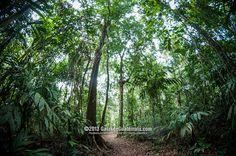 Tropical Rain Forest.