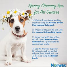 1000 Images About Pet Safe Cleaning Products On Pinterest