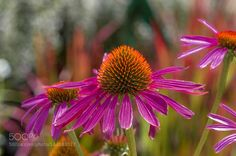 Blaze of color in the sunshine by Nugget16 #nature #photooftheday #amazing #picoftheday