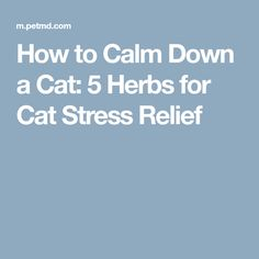 How to Calm Down a Cat: 5 Herbs for Cat Stress Relief