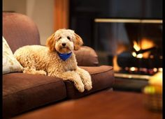 Hotels hire adorable pets as greeters, cos people like having animals around. So do we!