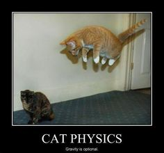 1000 images about physics memes on pinterest science
