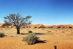 7 Day Classic Namibia (Self-Drive) Lodging , Safari, Perennial Grasses, Rift Valley, Namib Desert, Alpine Meadow, Biomes, Day Tours, Lodges, Evergreen
