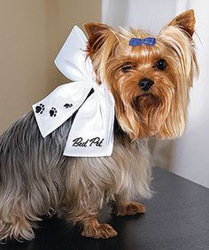 dressy bow for dog or cat