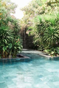 summer travel and jungle pool