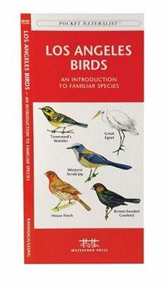 Los Angeles Birds: An Introduction to Familiar Species (US City Nature Guides) by James Kavanagh, http://www.amazon.com/dp/1583551484/ref=cm_sw_r_pi_dp_ozyKsb1AP3VQH