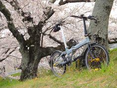 Copyright © 恵壱 様 / veloce 2008 / 近所の桜並木のある川沿いの桜と共に撮影しました。人通りも多い中、DAHONのミニベロだと軽快に移動ができるのでベストスポット探しにも重宝します。カメラポタには最適な自転車だと思います。