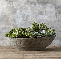 Restoration Hardware's Oval Low Stone Planter:An accommodating home for succulents or other small plants, our low, cast-stone planter will age gracefully through decades of use. Small Plants, Water Plants, Cactus, Planter Table, Planter Pots, Succulent Bowls, Succulent Ideas, Stone Planters, Orchid Planters