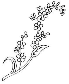 Forget Me Not Flower Drawings - to use for Alaska Pillow to go with State Flower Quilt.