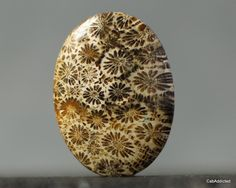 Fossilized Coral, Mystery, Nature, Naturaleza, Nature Illustration, Off Grid, Natural