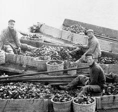 Oyster fishermen.