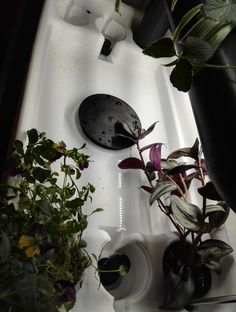 One hydroponic system with Ebb & Flow, NFT and DWC options.