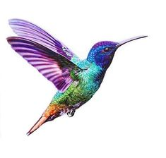 Printable Hummingbirds Coloring Pages. Hummingbirds are tiny birds that are good at flying and are one of the most beautiful and interesting birds. There are mo Hummingbird Drawing, Hummingbird Pictures, Watercolor Hummingbird, Watercolor Paintings, Humming Bird Watercolor, Hummingbird Colors, Images Colibri, Art Colibri, Tattoo Bunt