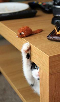 A-ha! I will get you!