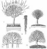 [Стиль бонсай] Хокидати (Hokidachi) - Бонсай форум   Мастерская бонсай - bonsay.org.ua