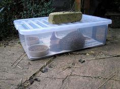 Cat Food Station - Want to feed hedgehogs but not your neighbourhood cats? A hedgehog feeding station may well be the answer. It also helps to keep the food and the hedgehog dry when it is raining. Hedgehog Box, Hedgehog House, Hedgehog Care, Ridge Tiles, Catering Food Displays, Cat Diet, Dry Cat Food, Food Stations, Kids Nutrition