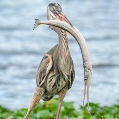 Animal Action, Beautiful Flowers Wallpapers, Birds Eye View, Flower Wallpaper, Heron, Mark Smith, In This Moment, Amazing, Animals