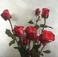 http://vientosdelnorte.tumblr.com/image/153575348199