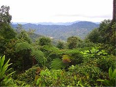 It is the Kokoda Trail which Papua New Guinea (PNG) is most famous for. It was along this trail in World War II where Australians fought alongside their Papuan allies against an invading Japanese force.