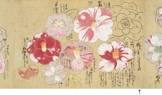 camellia japonica drawing  Japanese old document 1657 ツバキ 『草木写生春秋之巻』
