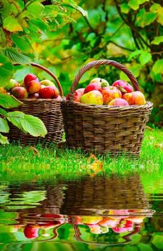 apple baskets reflections