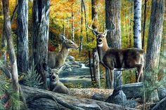 BEAR ART PRINT Basking in the Balsams by Kevin Daniel 16x20 Wildlife Poster