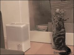 This is how cats react during a fire. - Imgur