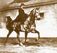 Loula Long Combs riding a five gaited horse aside at the slow gait