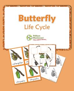 Free butterfly life cycle cards