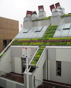 what is this?  Green roof, ZED factory display, Shanghai Expo livingroofs.org