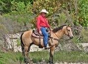 Video**Cute Golden Buckskin Ranch Gelding