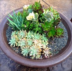 Re-purposed fire ring gets painted with rustoleum spray paint and filled with succulents and small landscaping rocks