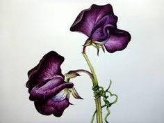 Resultado de imagen para flower scientific illustration