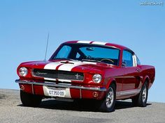 Ford Mustang Shelby GT350 1965-1966 Muscle Cars ~ muscle cars never die