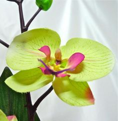 4-flower-orchid (583x600, 200Kb) МК Цветы из ткани. Master Class Fabric flowers