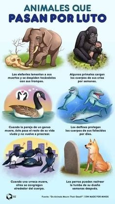 Animals That Go Through Mourning Animals And Pets, Baby Animals, Cute Animals, Animal Babies, Animal Jam, My Animal, Primates, Curious Facts, Asian Elephant