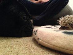 Grandpup and grandhog