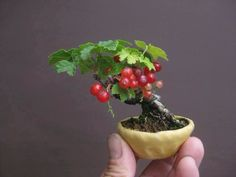 Bonsai   This is absolutely stunning