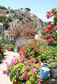 Greek lore with its vibrant  colors,sunny white plaster walls accented with bright blue doors and shutters paired with terracotta pots brimming with geraniums - Hydra Island