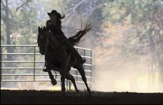 Barrel Racing and Speed is what I do best (: