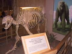 The Mammoth Site South Dakota