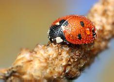 Lady Bug Micro Photography. Amazing shot.